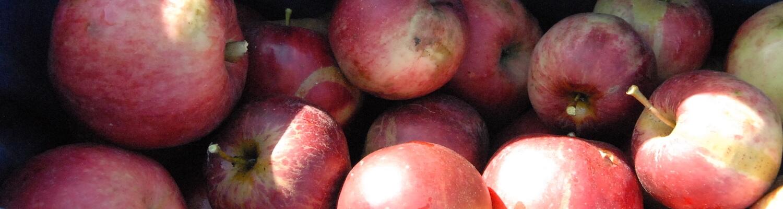 eric-boydens-boomgaardgesprekken-voor-wie